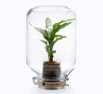 Planta Jar