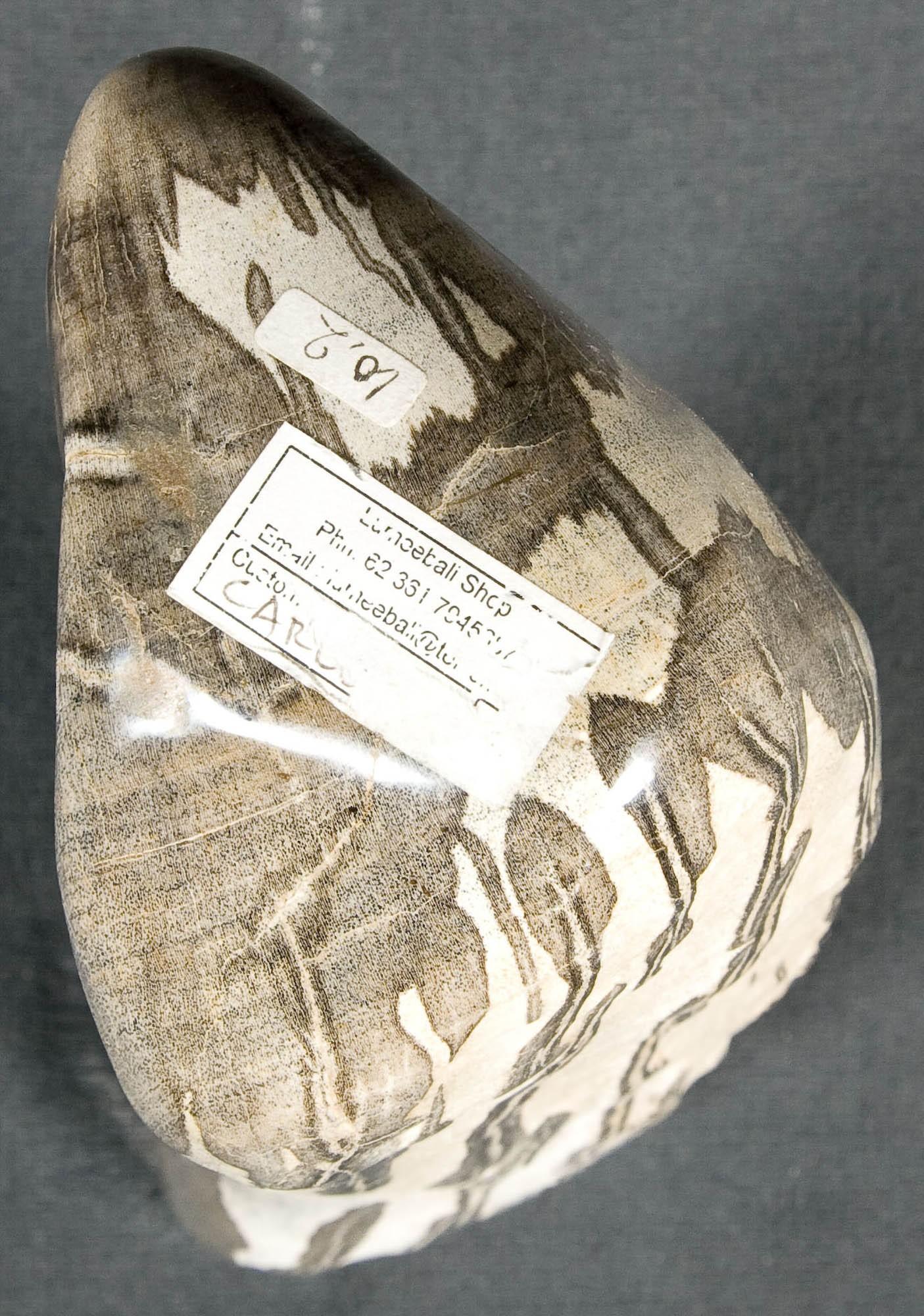 Escultura fosilizada