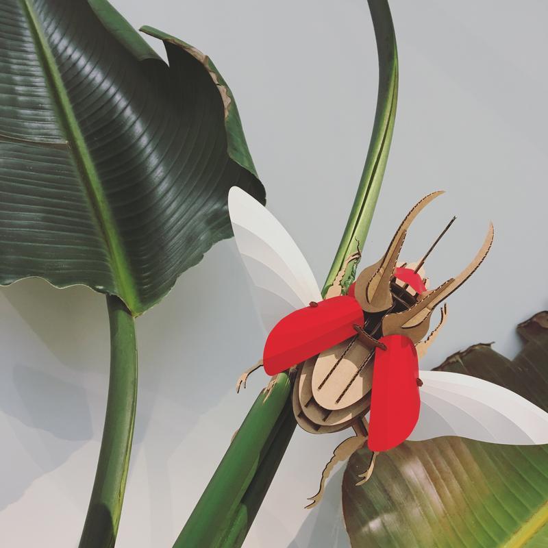 escarabajo carton rojo