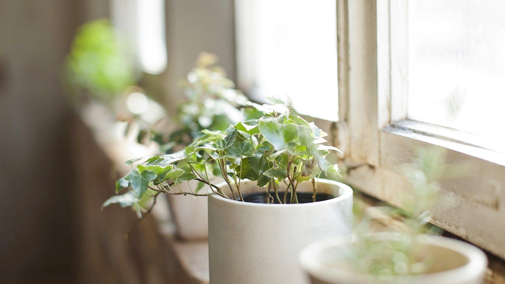 plantas en decoracion feng shui